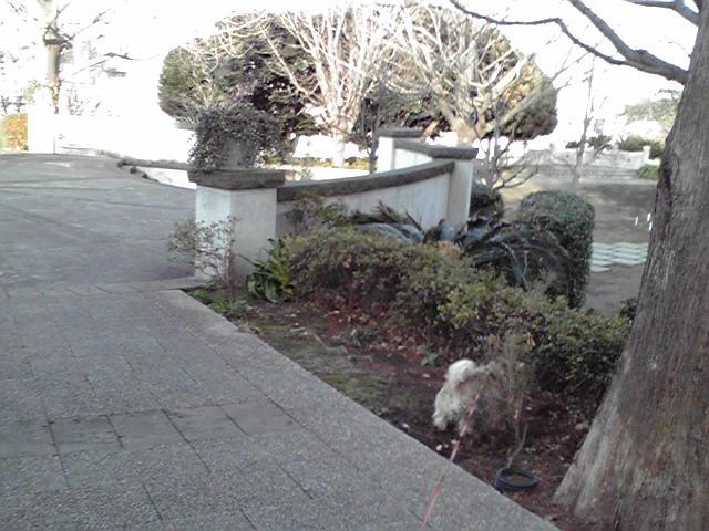 1月4日初詣犬