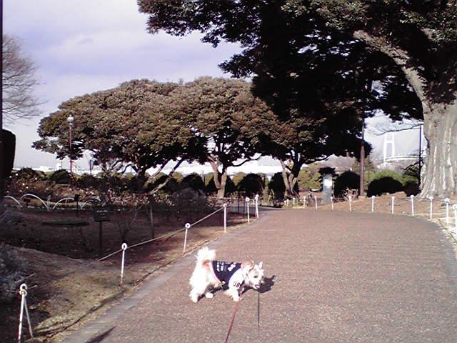 1月6日出初め式犬
