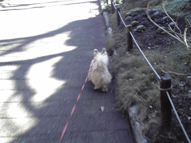 1月8日今日も良い天気犬