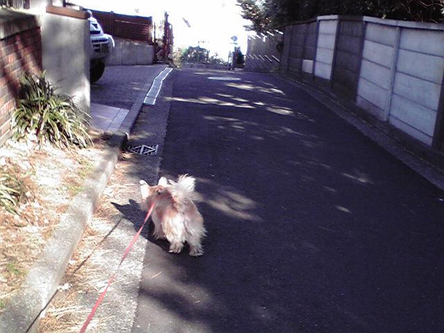 1月9日買い物犬