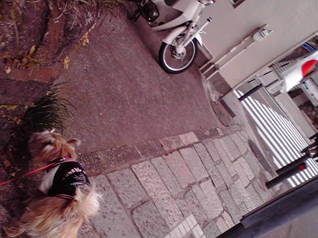 1月11日旗犬
