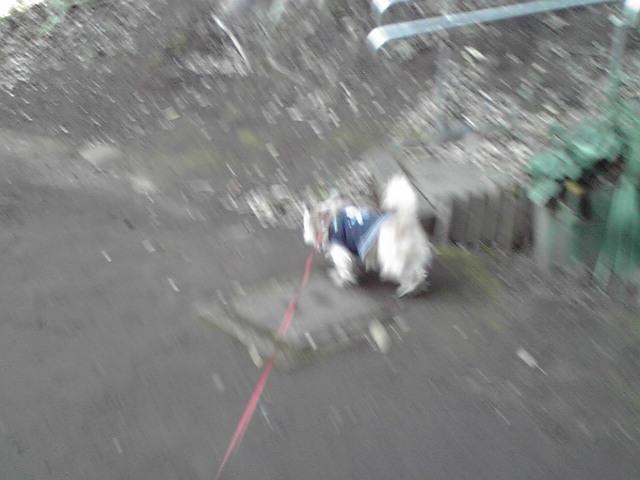 1月13日強風犬