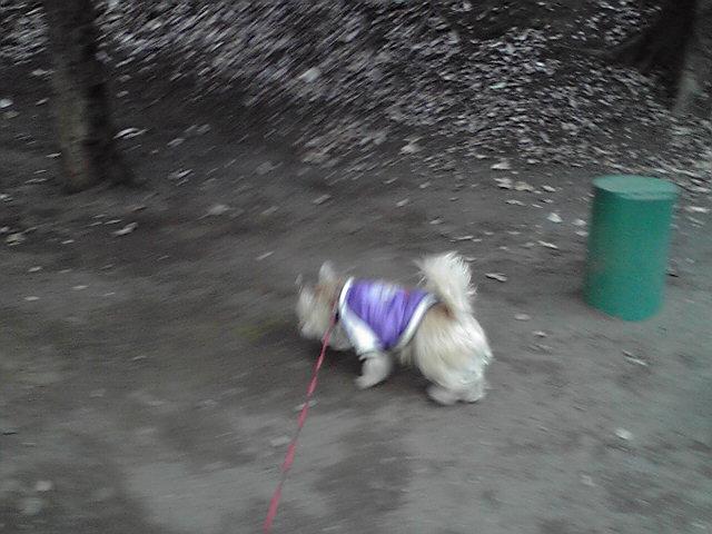 1月16日引っ越し犬