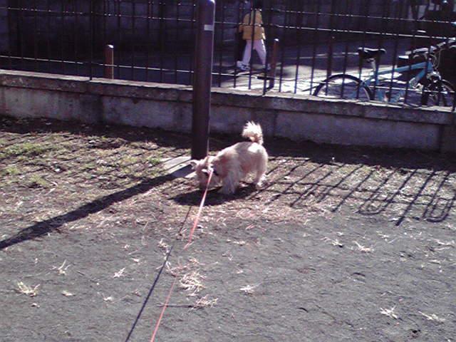 1月17日旅犬