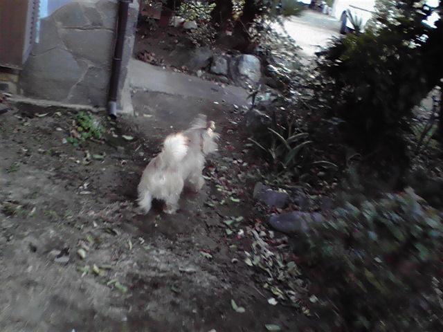 1月18日ばーちゃんち犬