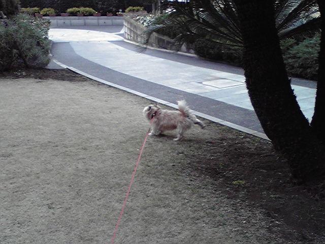 1月20日大寒犬