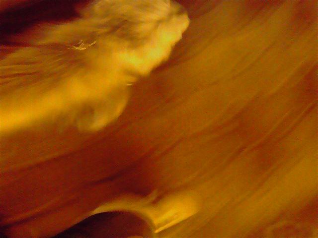 1月23日不動産屋さんに行く犬