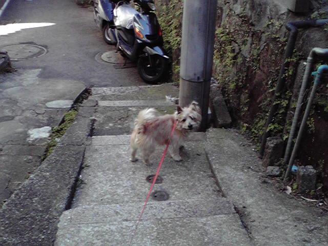1月24日ワンダフルサンデー犬