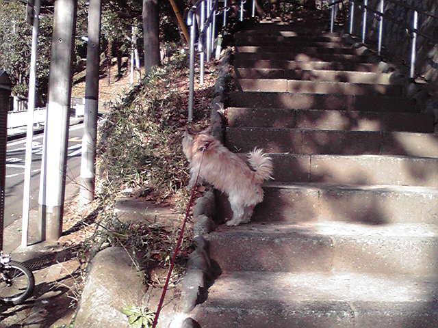 1月30日お散歩日和犬