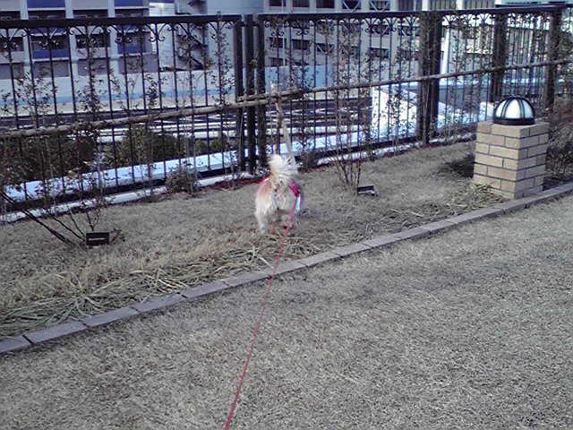 2月2日雪上がりの犬
