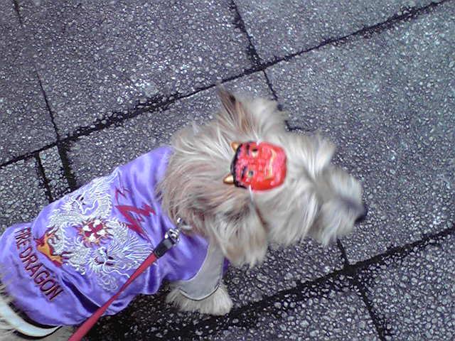 2月3日小鬼犬