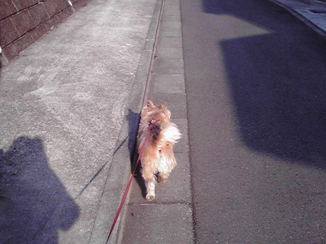 2月4日寒い犬