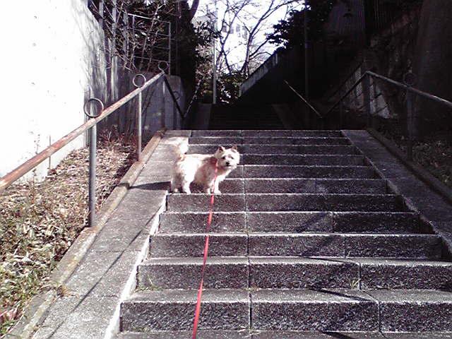 2月6日空犬