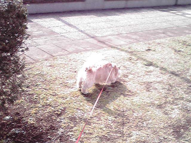 2月14日病み上がり犬