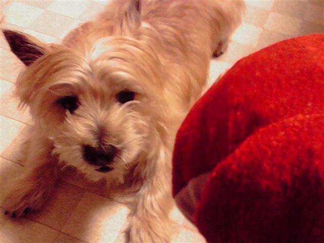 2月15日春節犬