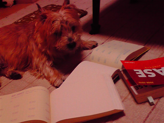 2月17日工事犬