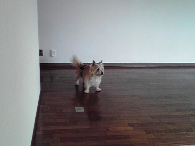 2月18日新しいお家犬