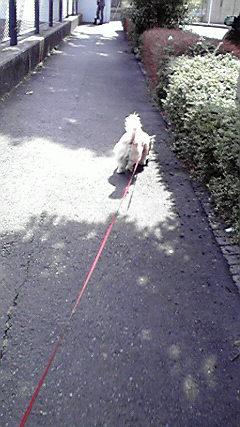 2月23日散歩犬