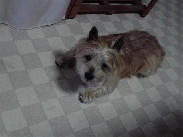 2月24日チャーミング犬