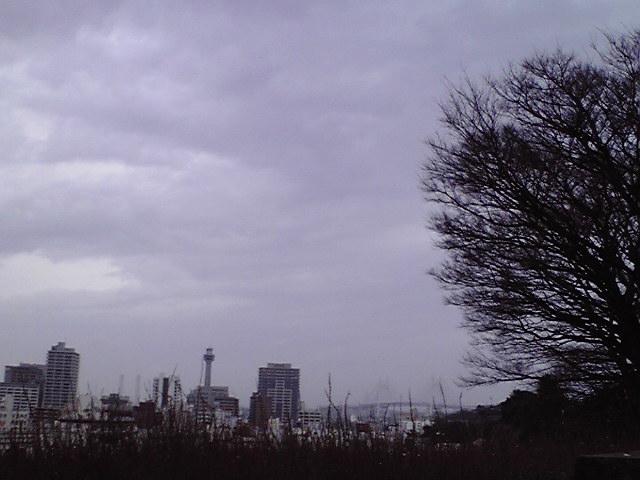 2月26日暗雲犬