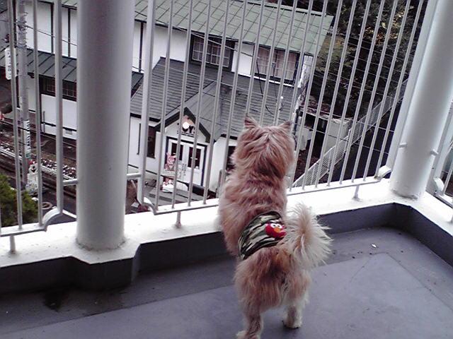 2月27日ベランダ犬