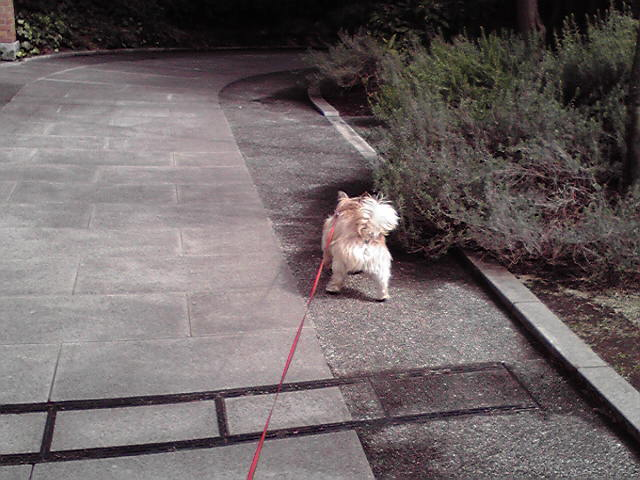 3月5日晴れ犬