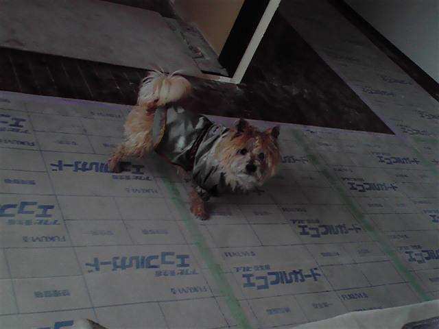 3月7日ペンキ犬