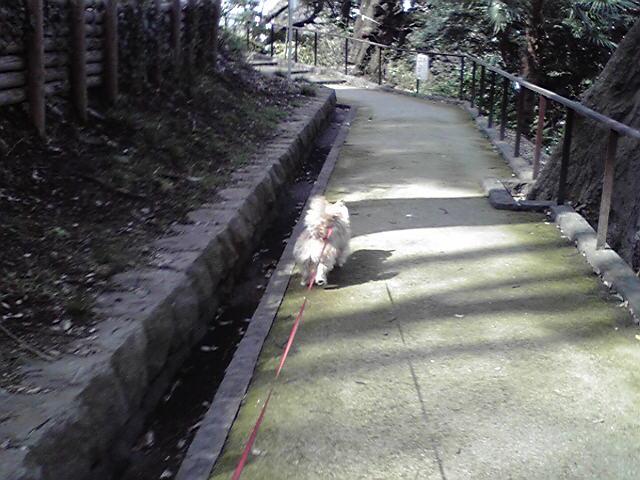 3月20日風犬