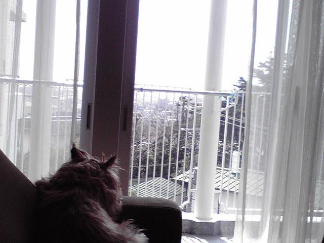 3月22日外を眺める犬