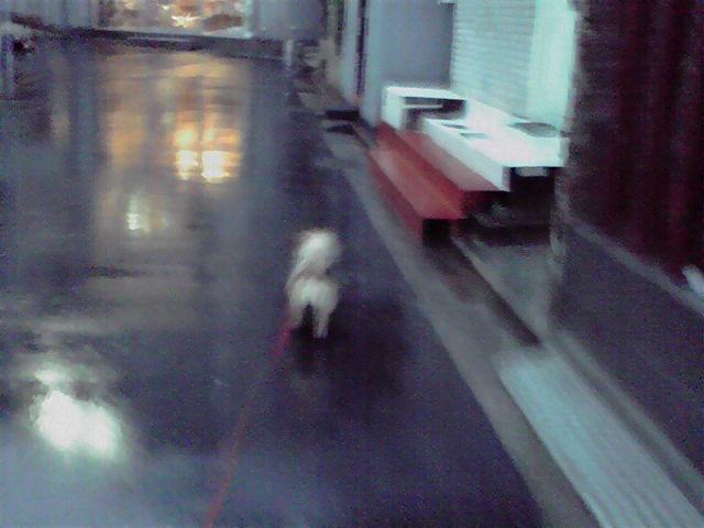 3月25日雨犬