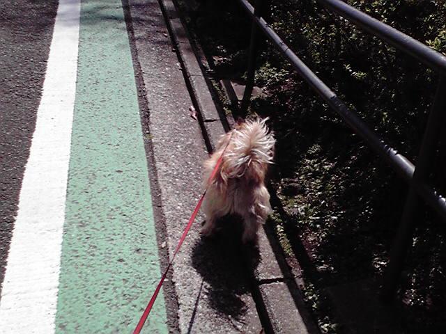 3月26日旅犬