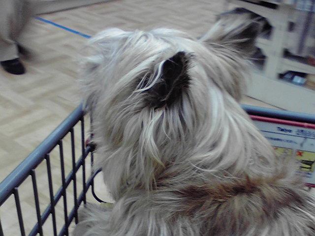 3月27日買い物犬
