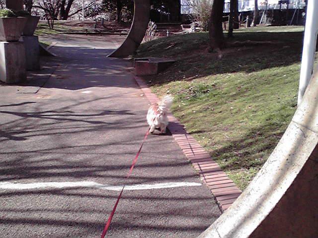 3月30日春の散歩犬