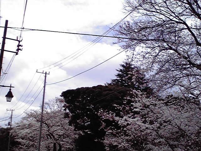 4月1日強風犬