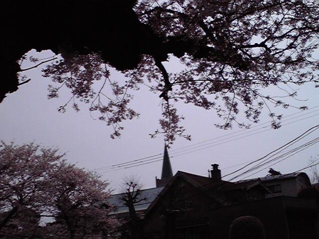 4月9日花と小父さん犬