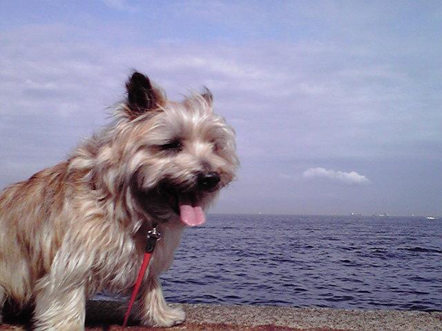 4月10日埠頭犬