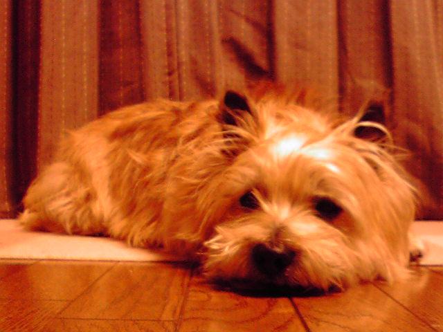 4月12日雨の犬