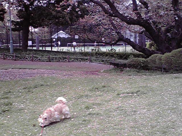 4月14日草萌犬