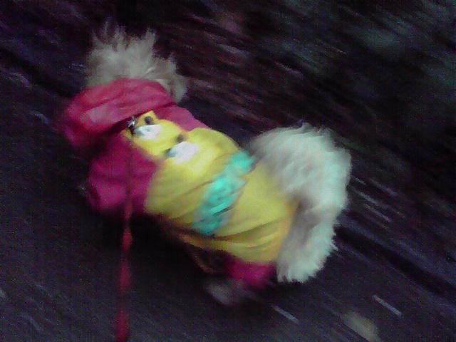 4月15日雨犬