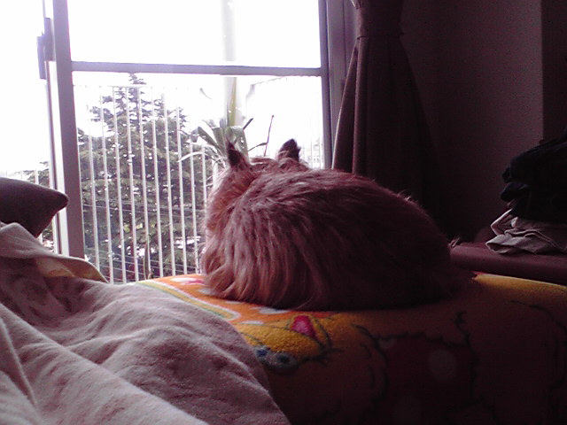 4月21日寒い犬