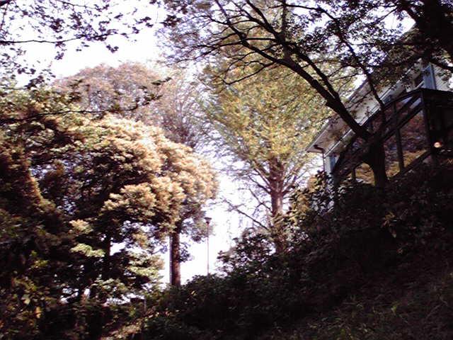 公園はしご