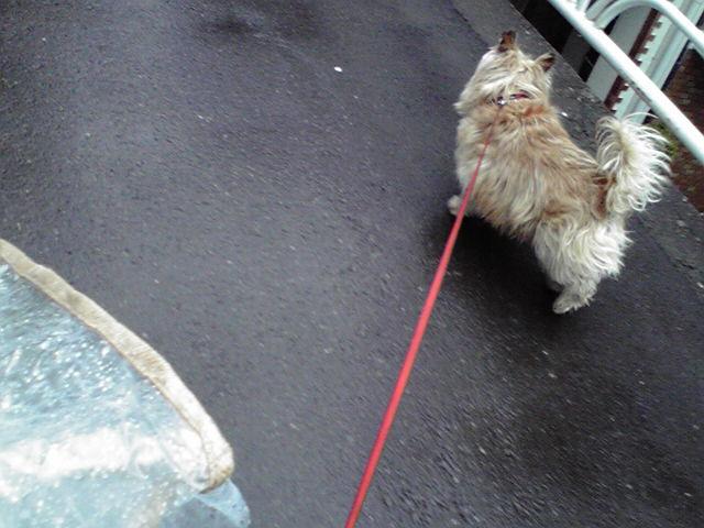 4月27日買い出し犬