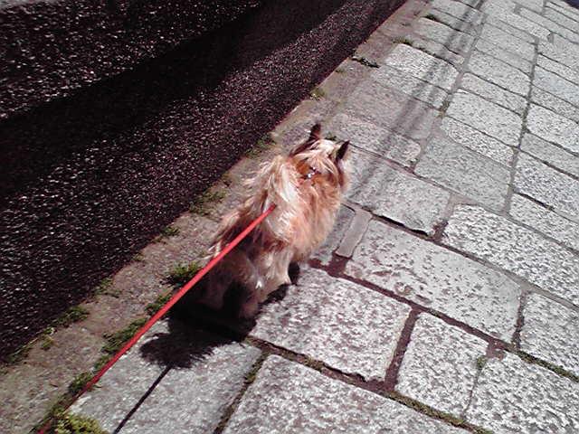 4月30日きゅんきゅん犬