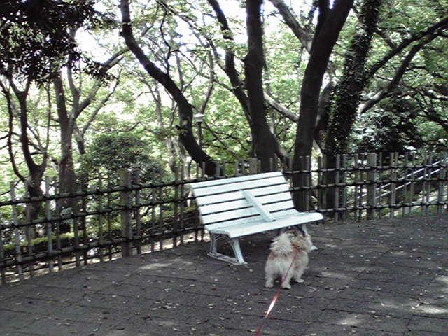 5月4日木漏れ日犬