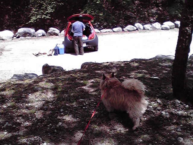 5月9日キャンプ犬
