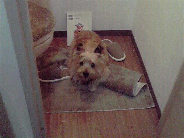 5月18日反省犬