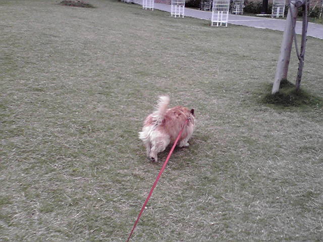 5月19日天気が悪い犬