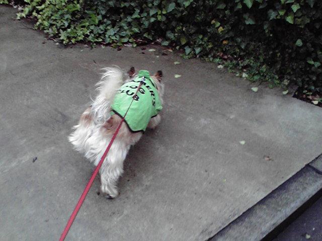 5月24日雨の切れ間犬
