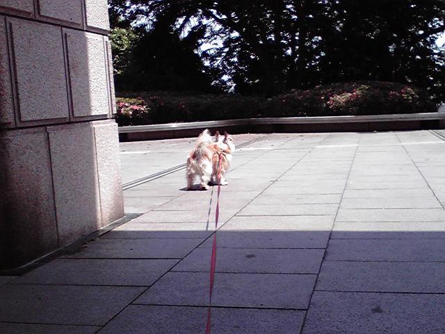 6月6日朝のパトロール犬