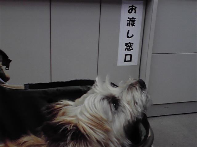 6月8日役場犬